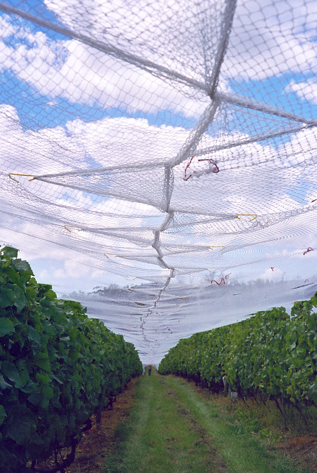 Orchard Netting Clip Envorinex